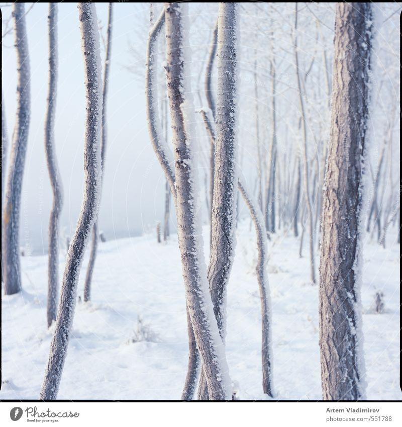 Frost#2 Landschaft Luft Winter Nebel Eis Baum Park Flussufer kalt blau weiß Farbe 6x6 Stadtbild ektar Filmmaterial Krasnojarsk sq-ai Bronica Zenzanon Kodak