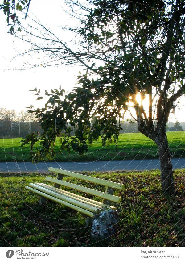 Einsam im Abendrot Baum Bank Spaziergang Fußweg Parkbank