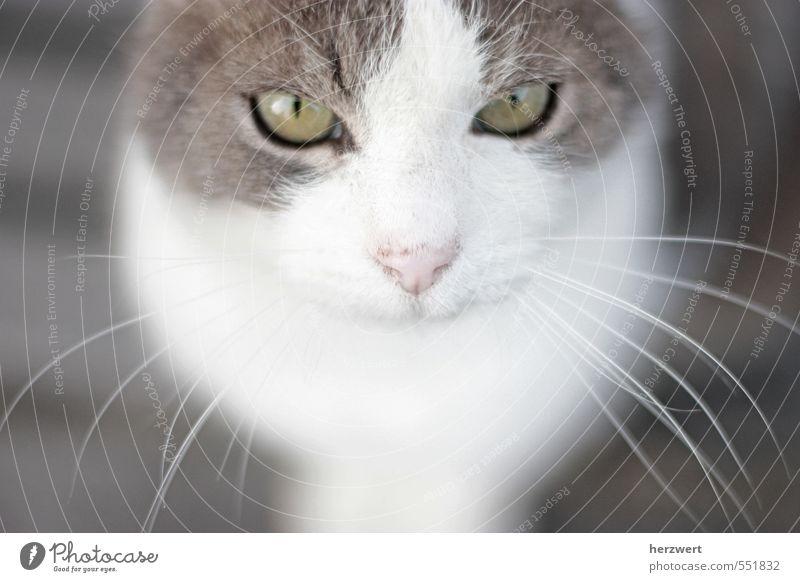 Hallo, ich heiße Flo Tier Haustier Katze ruhig Schnurrhaar Katzenauge Blick Gedeckte Farben
