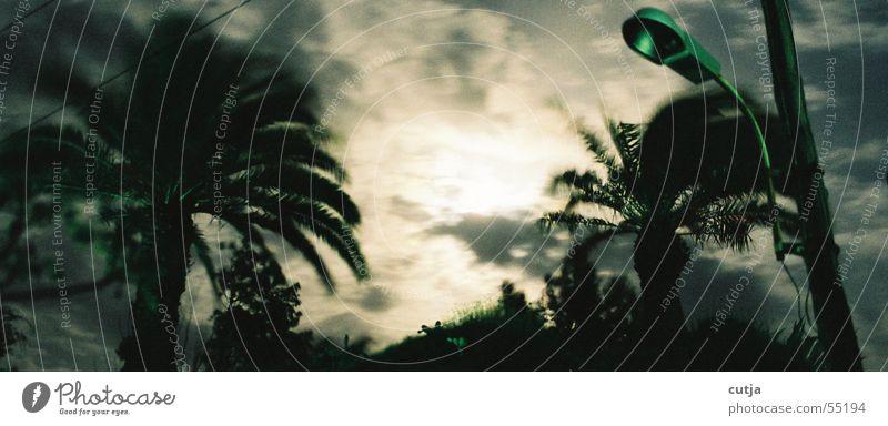 stürmisch Nachthimmel Sturm Laterne Palme
