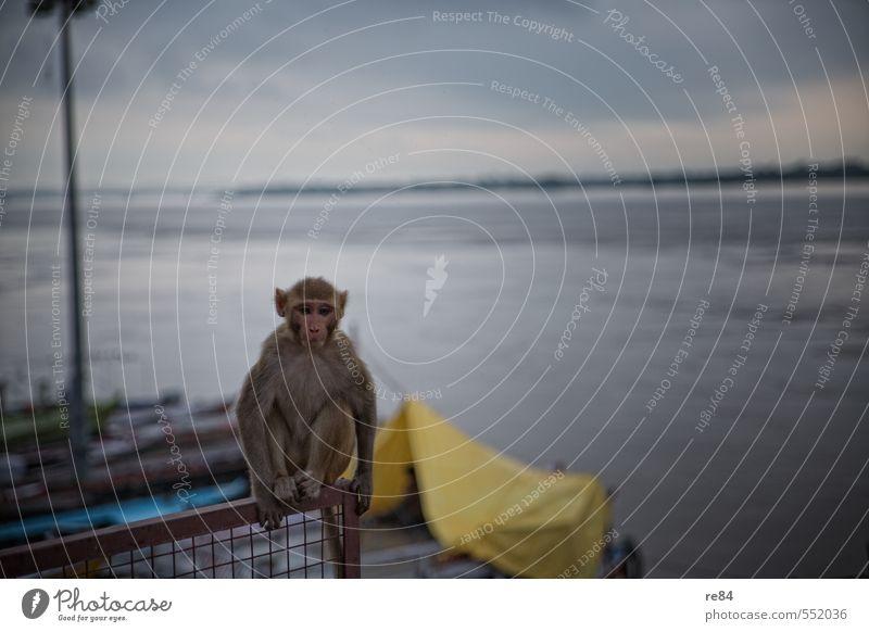 Warten auf Godot Wasser Himmel Fluss Fischerboot Tier Wildtier Affen beobachten Denken Blick sitzen frech kalt Stimmung achtsam Wachsamkeit Gelassenheit