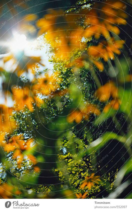 Lichtstrahlen/Stern | Na ja, ein bisschen! Natur grün Pflanze Sommer Sonne Baum gelb Umwelt Gefühle Blüte natürlich Garten orange Wachstum Schönes Wetter einfach