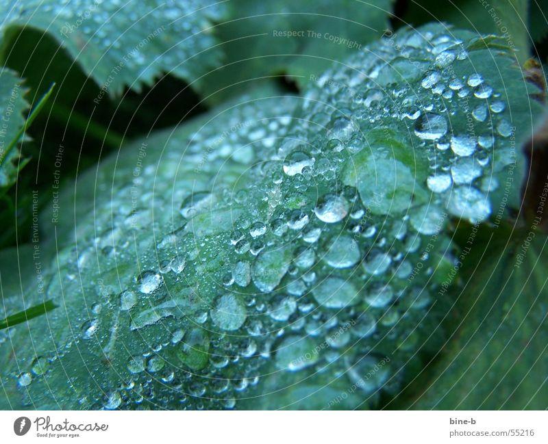 Tautropfen im Winter Wasser Blume Pflanze Blatt kalt Regen Wassertropfen nass Seil nah Grünpflanze ungemütlich Niederschlag