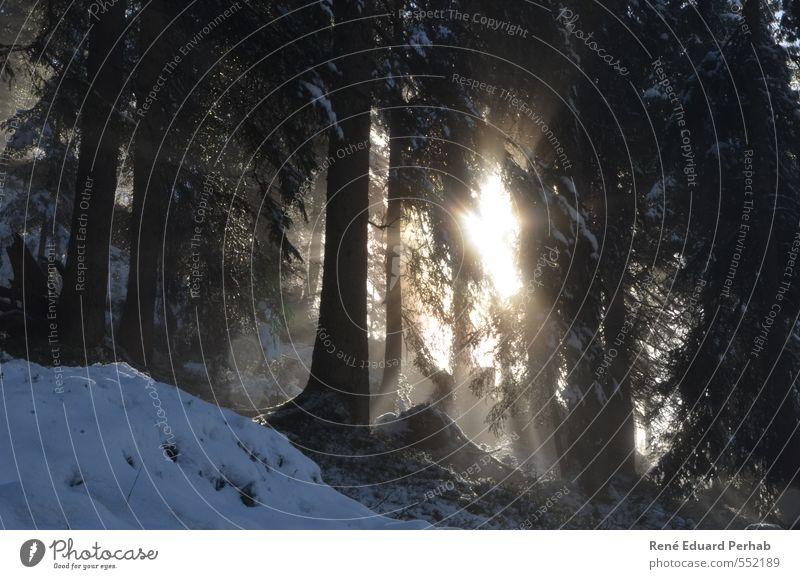 Sonnenstrahlen die in den Wald dringen... Natur Pflanze Baum Landschaft Wolken Winter Umwelt Berge u. Gebirge Wärme Schnee Herbst Gras lachen Denken Luft
