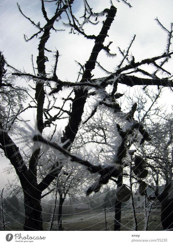 Eisnadeln Winter kalt Eis Frost Raureif stachelig