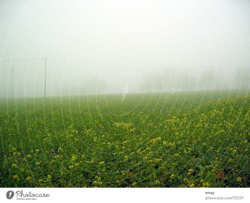 Nebelwiese Blume Wiese Nebel trüb