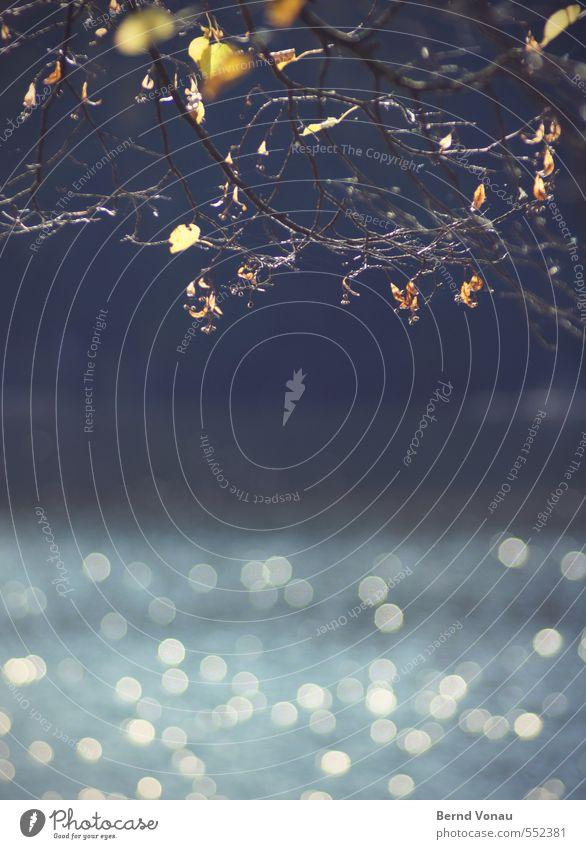 Bärensee 2013 | Aussicht Umwelt Natur Landschaft Pflanze Wasser Sonnenlicht Herbst Schönes Wetter Baum Blatt glänzend hell natürlich schön Wärme blau gelb