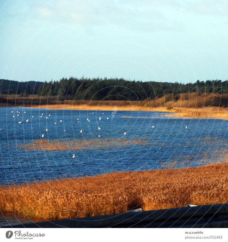 white dots Himmel Natur Ferien & Urlaub & Reisen Pflanze Landschaft Tier Ferne gelb Umwelt Herbst See braun Vogel gold Wildtier Tourismus