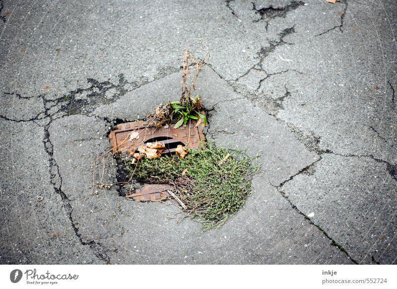 Grünanlage Umwelt Herbst Pflanze Gras Stadtrand Menschenleer Gully Straße Asphalt Abfluss Ekel Gefühle trist Natur Umweltverschmutzung Verfall Rest Gitterrost
