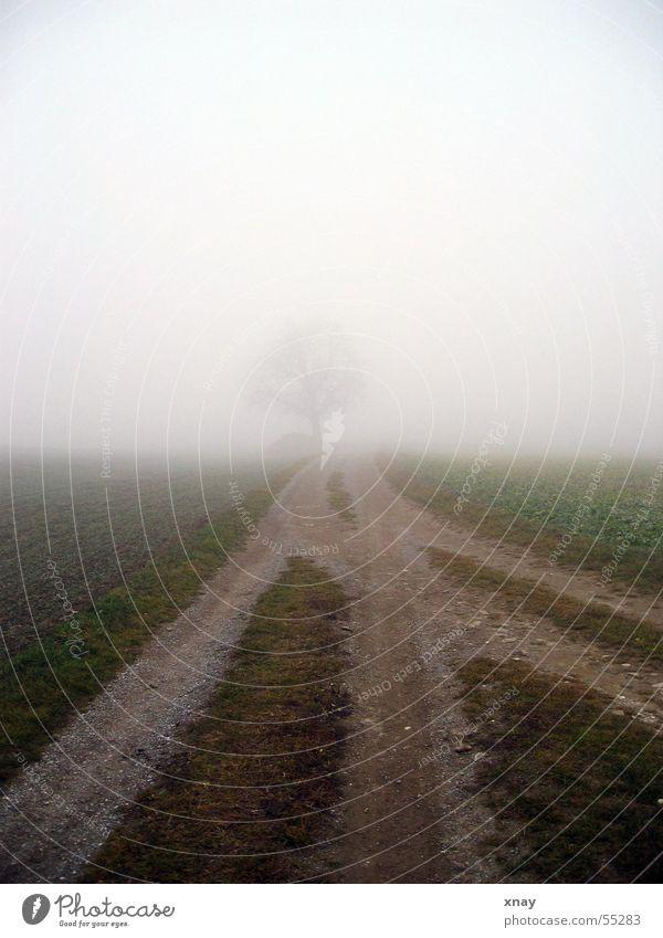 Nebelbaum Baum Fußweg Einsamkeit kalt baum im nebel