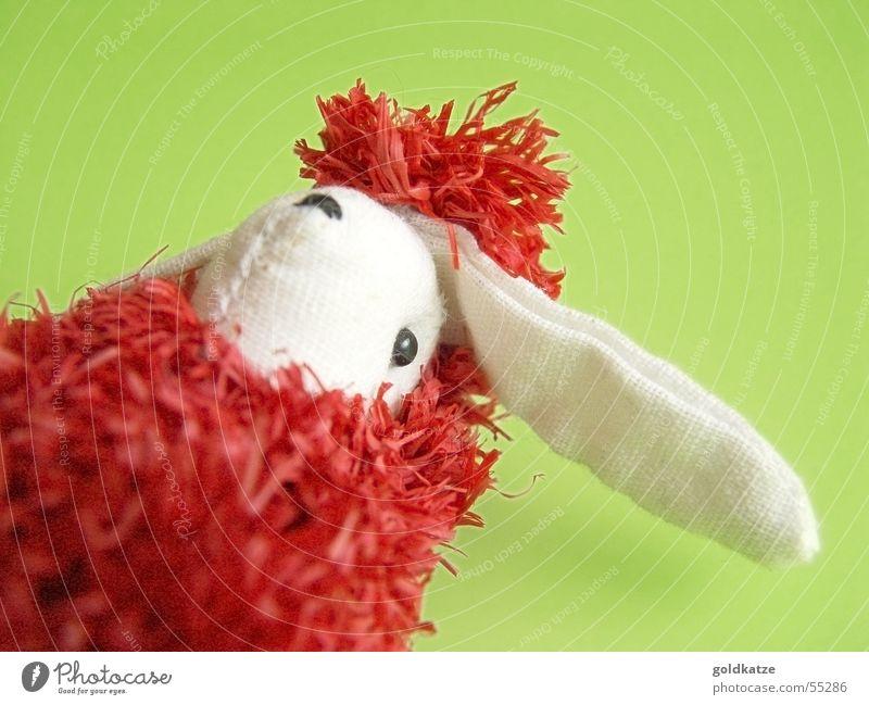hase oder schaf? grün rot Freude Tier Spielen Kopf Frühling lustig Kindheit Fröhlichkeit verrückt außergewöhnlich Dekoration & Verzierung Ohr niedlich Tiergesicht