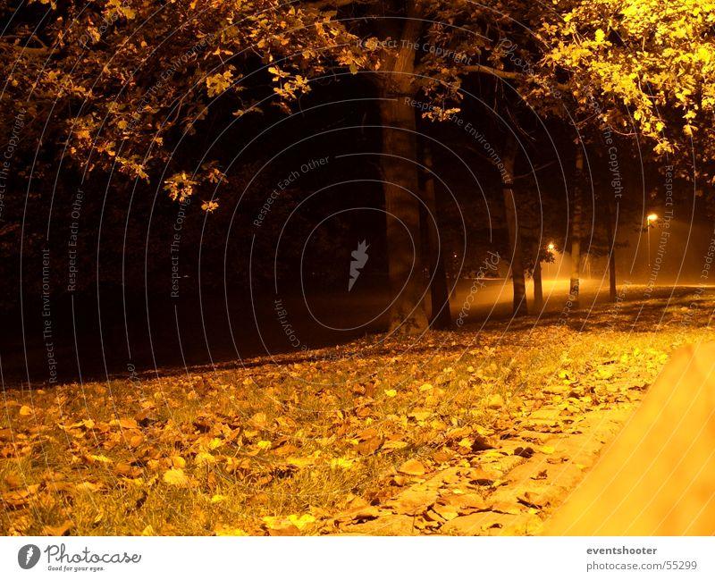 n8park Baum Einsamkeit Herbst orange beruhigend Heilbronn