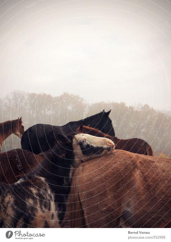 Kuschelgruppe Natur weiß Baum Wolken schwarz Wald grau braun Feld Kindheit Rücken Tiergruppe Pferd Ohr Fell Dorf
