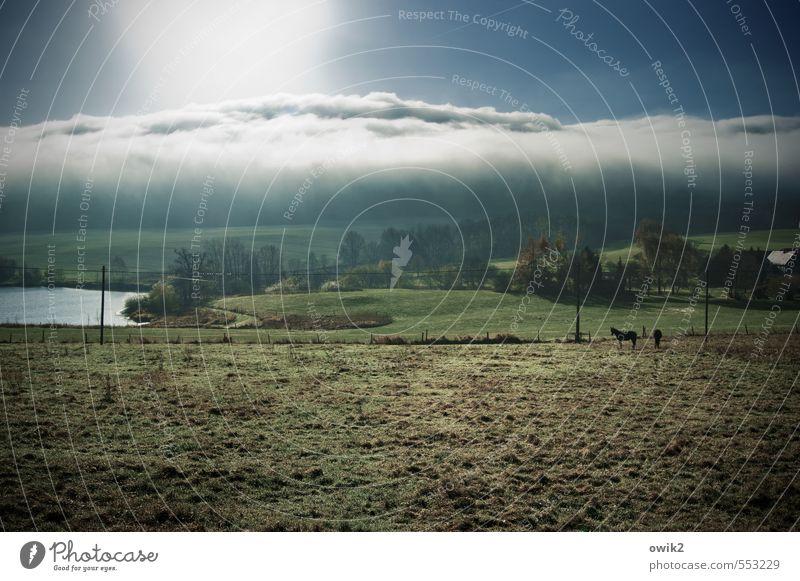 Zudecke Umwelt Natur Landschaft Pflanze Tier Himmel Wolken Horizont Klima Wetter Schönes Wetter Baum Gras Sträucher Wiese Teich Weide Nutztier Pferd 2 Strommast
