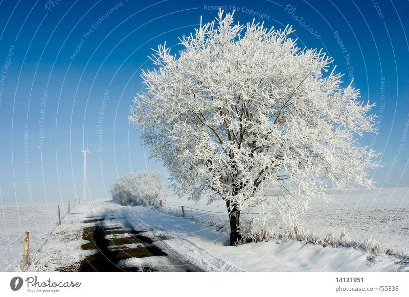 Kalt Himmel weiß Baum blau Winter kalt Schnee