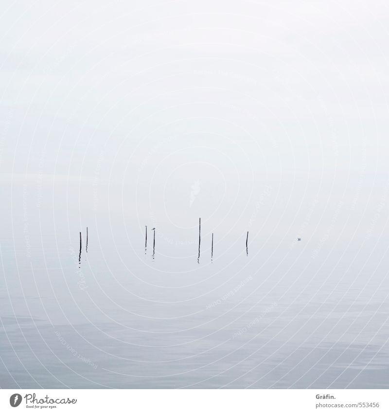 Nebel Herbst Winter schlechtes Wetter Wellen Küste Ijsselmeer Vogel Möwe kalt blau weiß ruhig Einsamkeit Surrealismus Unendlichkeit Reflexion & Spiegelung