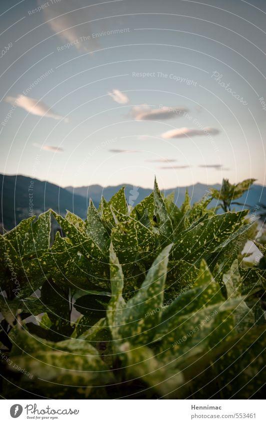 Entfaltung. Natur Ferien & Urlaub & Reisen grün Pflanze Sommer Landschaft ruhig Blume Blatt Tier Berge u. Gebirge Garten Horizont Stimmung Wachstum wandern