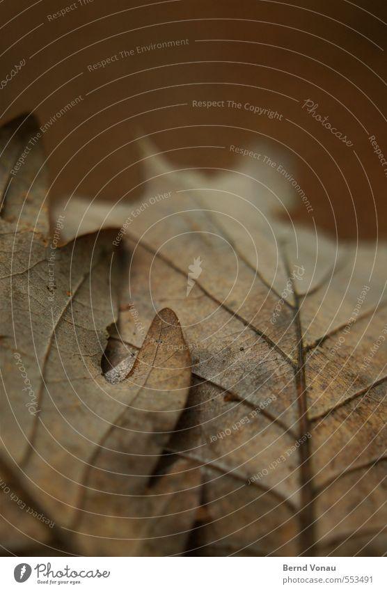 Beistand Umwelt Natur Pflanze Herbst Baum Blatt Wald braun grau rot Herbstlaub Blattadern Zusammensein aufeinander rund Umrisslinie Strukturen & Formen