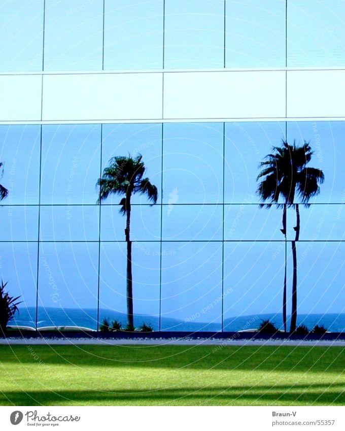 glass-palms Himmel Meer grün blau Wiese Fenster Küste Glas Palme