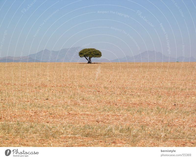 Einsamer Baum Sommer Einsamkeit Berge u. Gebirge Landschaft hell trocken