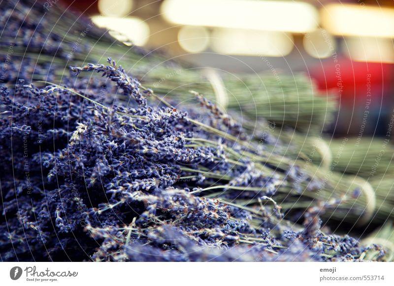 Lavendel Kräuter & Gewürze Arbeit & Erwerbstätigkeit Gartenarbeit Handel Markt Duft natürlich violett Farbfoto Außenaufnahme Nahaufnahme Menschenleer Tag