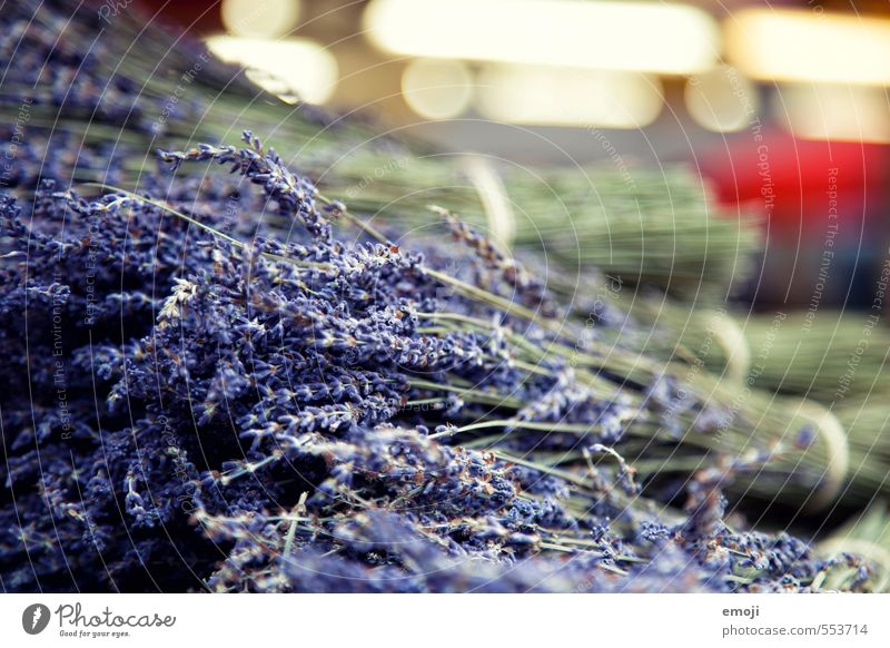 Lavendel natürlich Arbeit & Erwerbstätigkeit violett Kräuter & Gewürze Duft Handel Markt Gartenarbeit