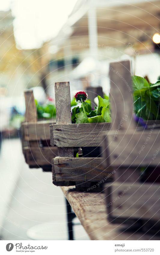 Blumenkisten Natur grün Pflanze Umwelt natürlich Markt Kiste Grünpflanze Floristik Marktstand