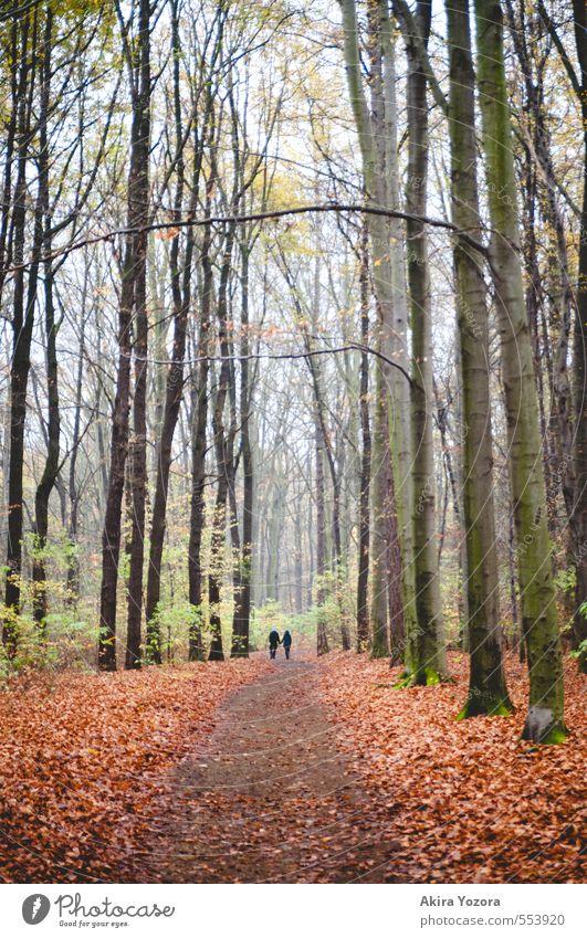 walk the road, together. Mensch Natur grün Baum Landschaft Blatt Wald schwarz gelb Liebe Gefühle Herbst natürlich Glück braun Paar