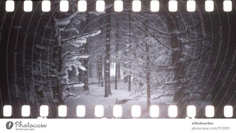 those winters Natur Baum Einsamkeit Winter Wald dunkel kalt Schnee Schneefall Eis Frost analog unheimlich