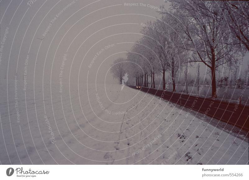 Driving home for Christmas Himmel Ferien & Urlaub & Reisen Pflanze Baum Einsamkeit Landschaft Wolken Winter dunkel kalt Straße Schnee Horizont Schneefall Eis