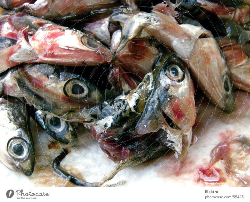 Fisch stinkt vom Kopf her Auge Ernährung frisch viele Fischereiwirtschaft Haufen maritim tauen Sardinen Fischmarkt Fischkopf fischig Totes Tier