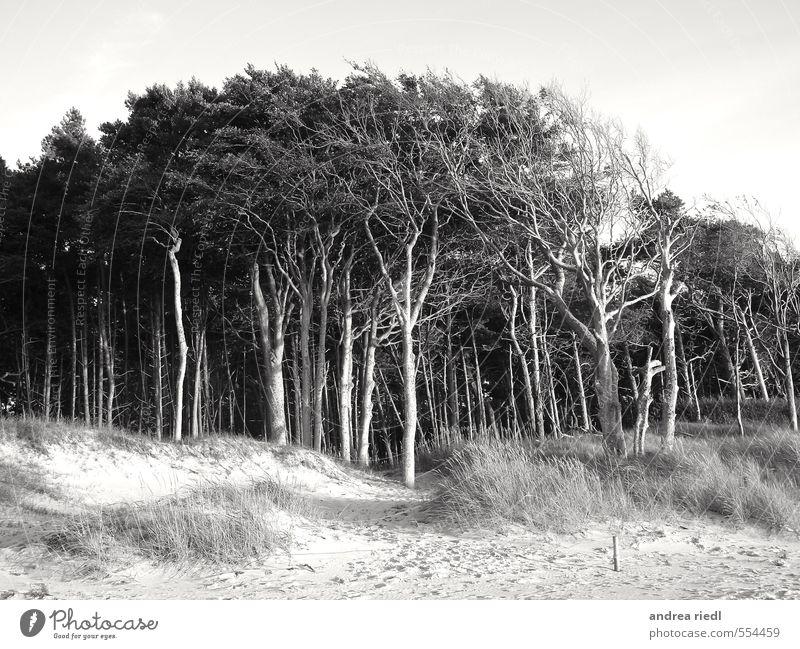 Beieinander Zufriedenheit Sinnesorgane Meditation Meer Umwelt Natur Landschaft Pflanze Urelemente Sand Wasser Frühling Sommer Herbst Wetter Wind Sturm Baum Gras