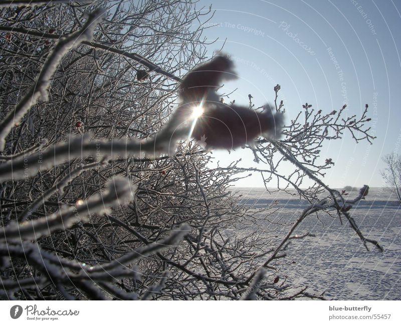 Hagebutten vor Sonne Natur rot Freude Winter Schnee Freiheit Sträucher Rose Thüringen