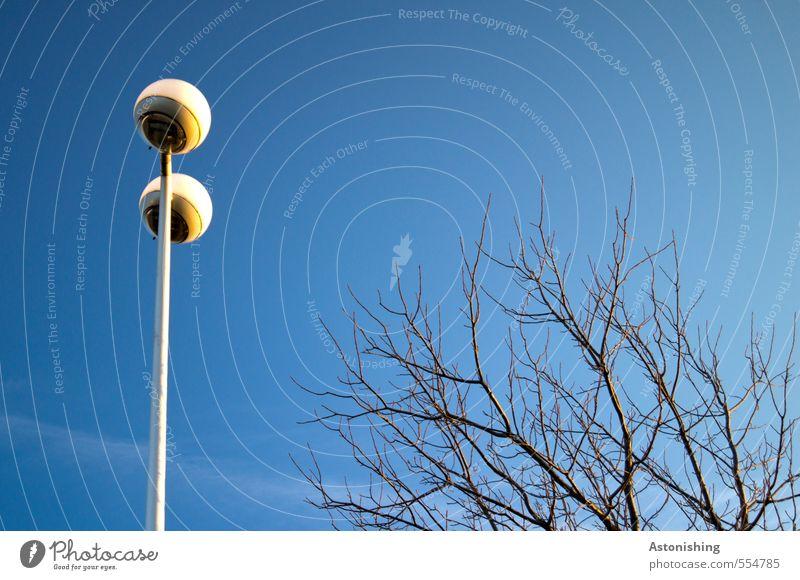 dem Licht entgegen Umwelt Natur Luft Himmel Wolkenloser Himmel Herbst Wetter Schönes Wetter Pflanze Baum Park stehen Wachstum dünn hoch blau schwarz weiß