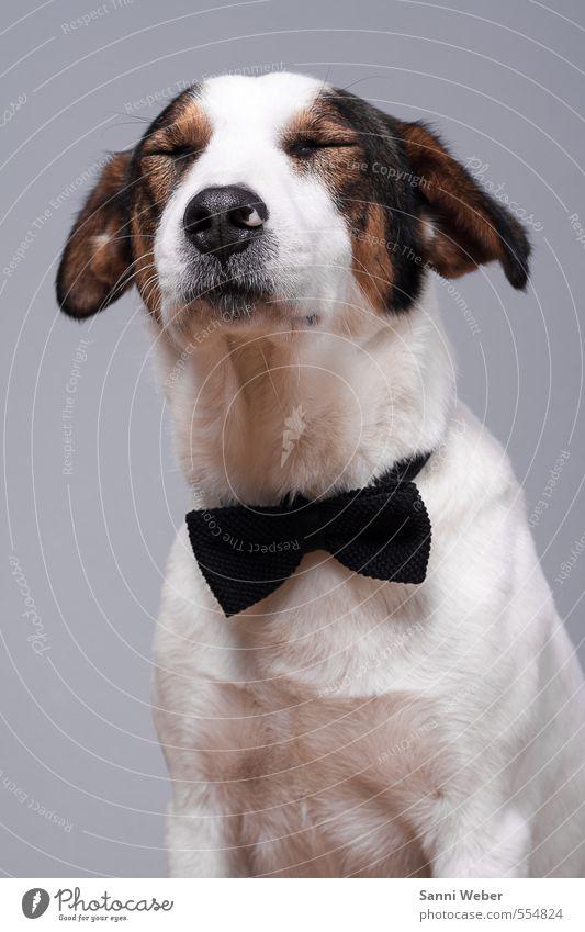 Hund weiß Tier Gefühle Denken Freundschaft elegant genießen schlafen einzigartig Kontakt Tiergesicht hören Haustier Originalität Musik hören