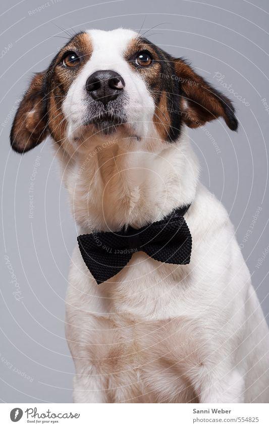 Hund weiß Freude Tier Liebe Gefühle Denken Freundschaft elegant stehen Fröhlichkeit Spitze genießen einzigartig Kontakt Tiergesicht