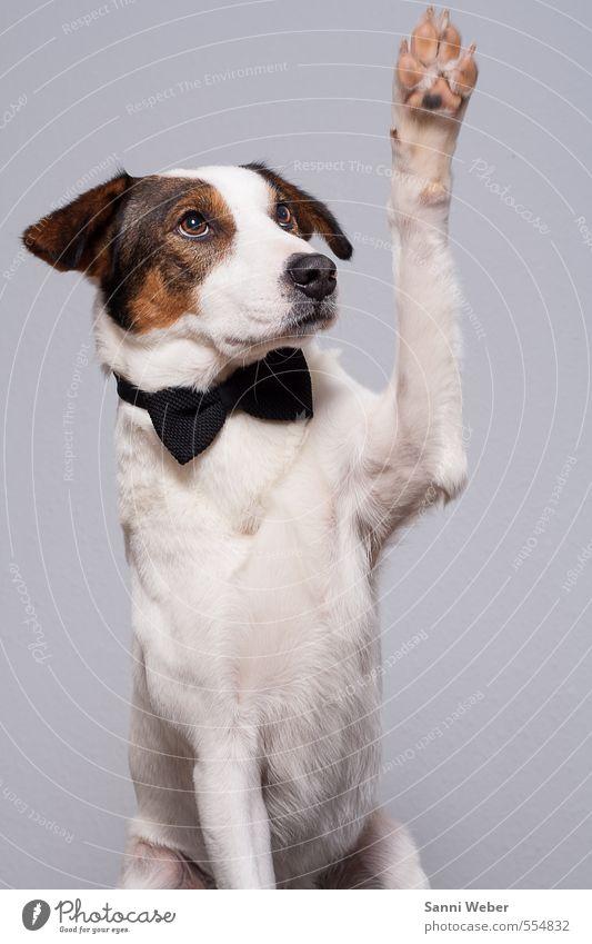 Hund weiß Tier Gefühle Freundschaft elegant sitzen einzigartig Kontakt Tiergesicht Leidenschaft Partnerschaft Haustier Tierliebe
