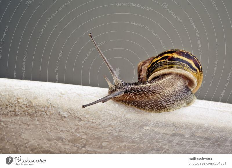Curious Snail Natur schön Sommer Tier gelb Umwelt grau natürlich Geschwindigkeit Fröhlichkeit beobachten niedlich einfach Neugier rennen Gelassenheit