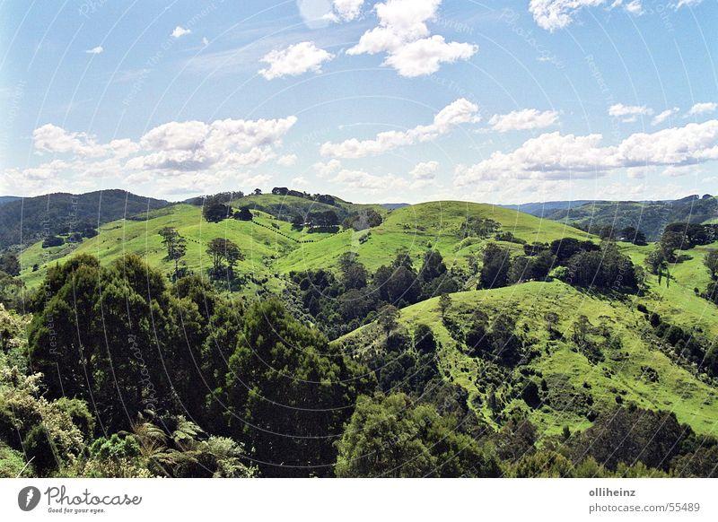 Grünes Down Under Himmel Baum grün blau Blatt Wolken Ferne Gras Berge u. Gebirge Freiheit Landschaft Rasen Sträucher Ast Hügel Zaun