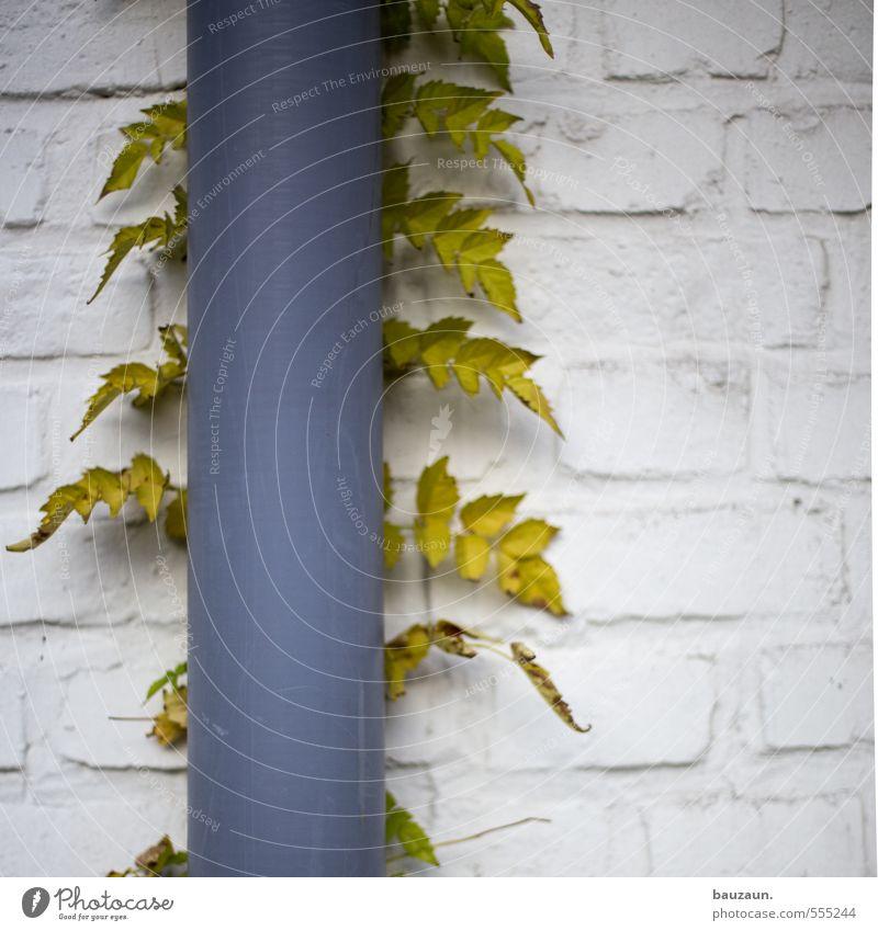 verwachsen. Pflanze grün weiß Blatt Haus Wand Gebäude Mauer grau Garten Stein Linie Fassade Metall Wachstum Bauwerk