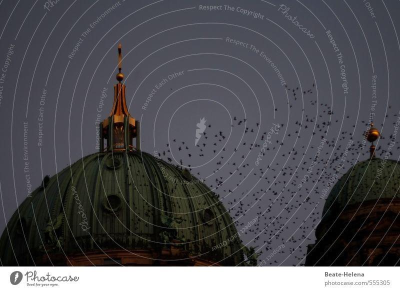 Gruppenfeeling | Gemeinsam sind wir stark! Himmel Ferien & Urlaub & Reisen blau grün Tier Umwelt Herbst Berlin außergewöhnlich fliegen Vogel gold Luftverkehr