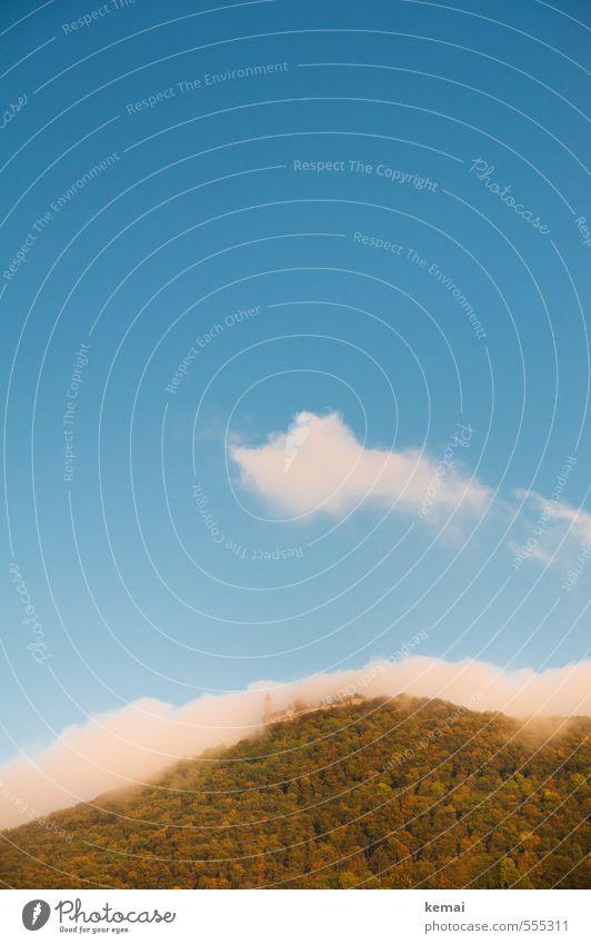 Love your Heimat // Die Burg Teck II Umwelt Natur Landschaft Himmel Wolken Sonnenlicht Herbst Schönes Wetter Nebel Pflanze Baum Grünpflanze Wald Hügel