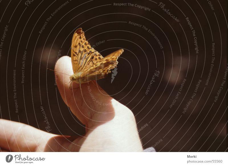 im Einklang mit der Natur Hand Sonne Tier Zusammensein orange Frieden Insekt Vertrauen zart Schmetterling sanft harmonisch Zärtlichkeiten Verbundenheit