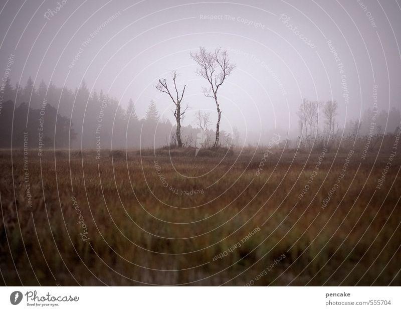 moorsoldaten Natur Landschaft Ferne Umwelt Herbst Stimmung Musik Erde Nebel Urelemente Zeichen Romantik Kultur violett Vertrauen Schmerz