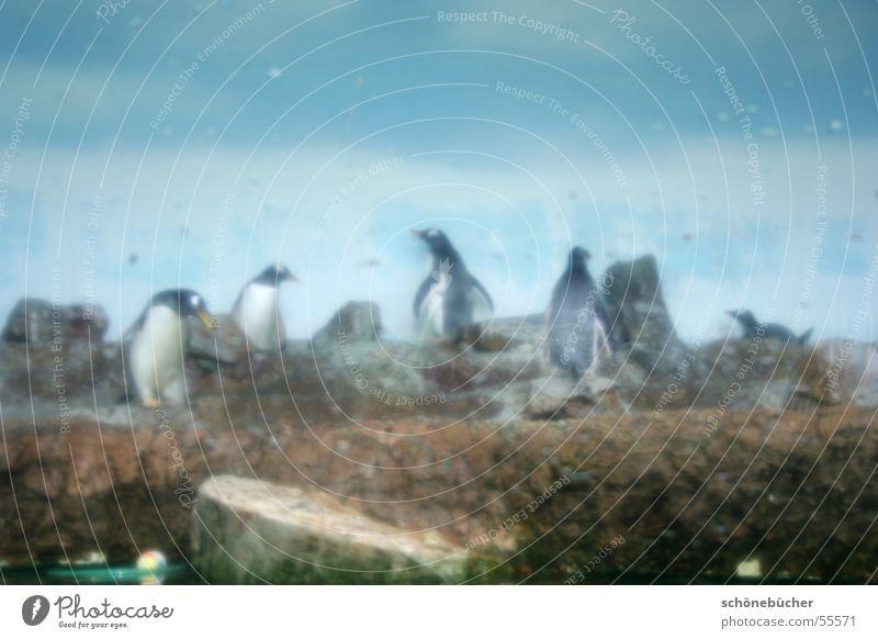 Schlechte Sicht Wasser Himmel Stein Nebel Wassertropfen Zoo feucht eng gefangen Pinguin Glasscheibe Käfig Antarktis bespritzt