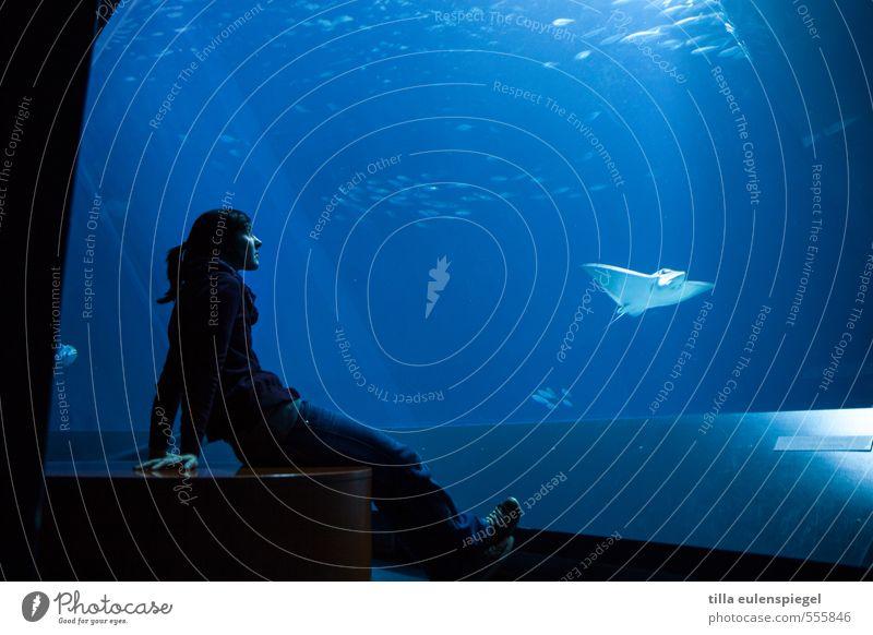 Geheimis des Meeres Mensch Frau Jugendliche blau Wasser Erholung Junge Frau ruhig Tier Erwachsene feminin Schwimmen & Baden beobachten Pause Meerestiefe