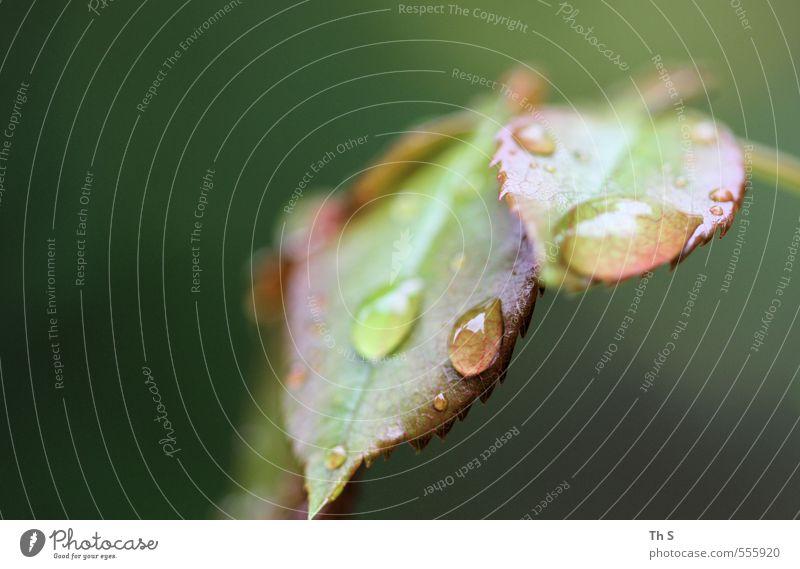 Regentropfen Natur grün Pflanze Blatt authentisch ästhetisch nass Tropfen Gelassenheit harmonisch feucht geduldig