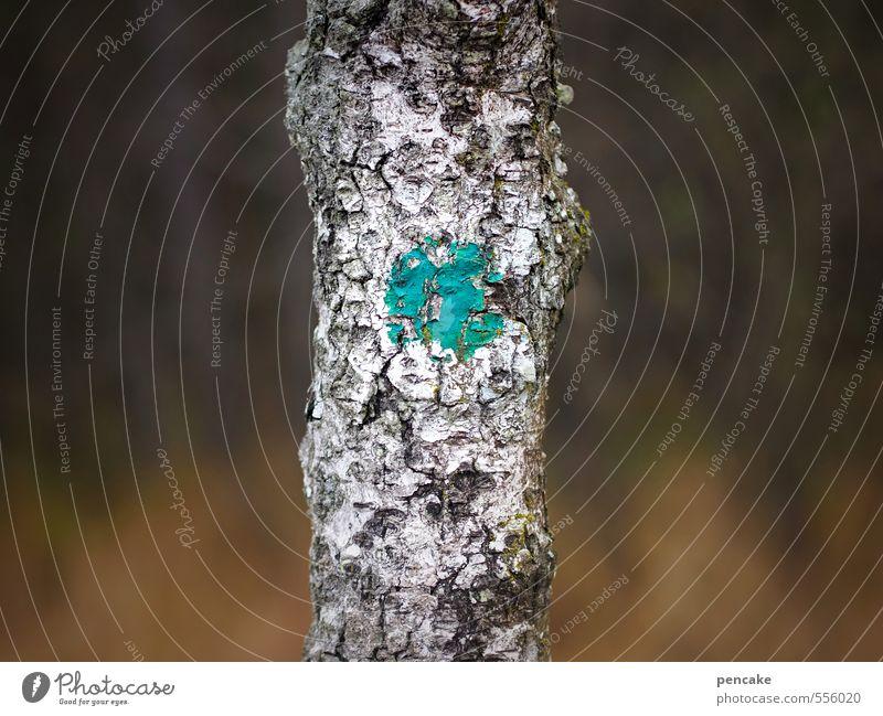 punktsieg | übungsgelände Natur Baum Landschaft Wald Herbst Erfolg Urelemente Abenteuer Zeichen Punkt türkis Baumrinde Treffer Gelände Birke schießen