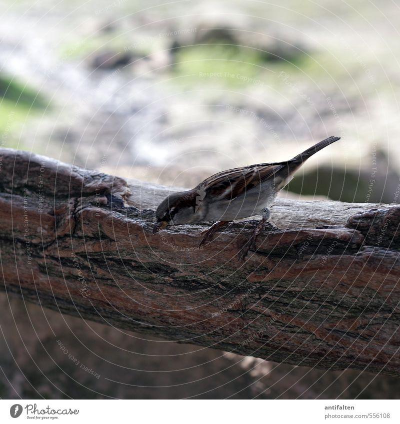Startklar Natur grün Sommer Baum Tier Herbst Gras grau klein natürlich Felsen braun Vogel fliegen Park Erde