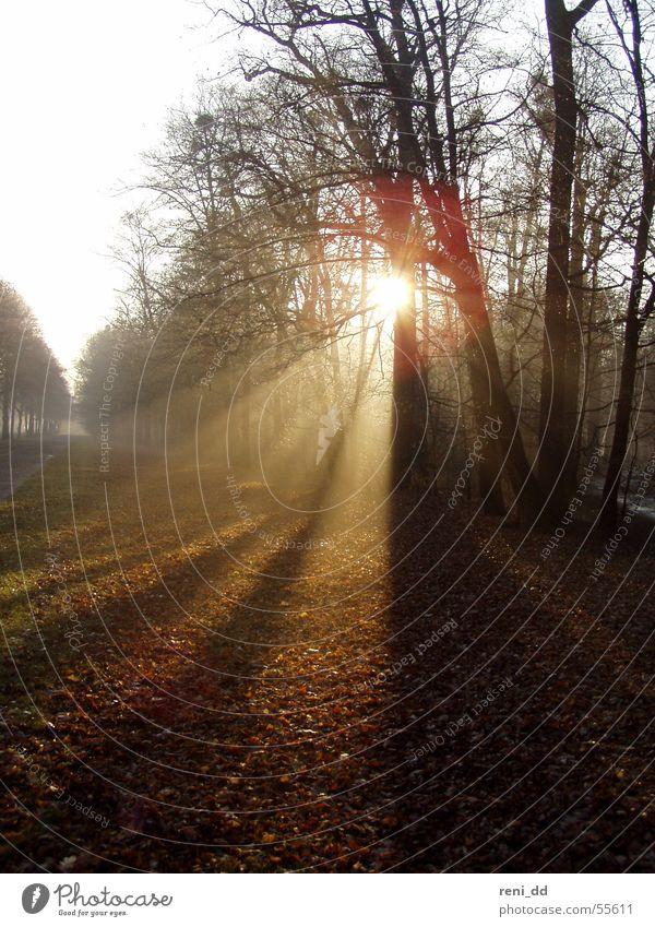 wald im morgenlicht Baum Sonne Blatt Wald kalt Herbst Nebel Dresden Jahreszeiten Allee Sachsen Lichtblick